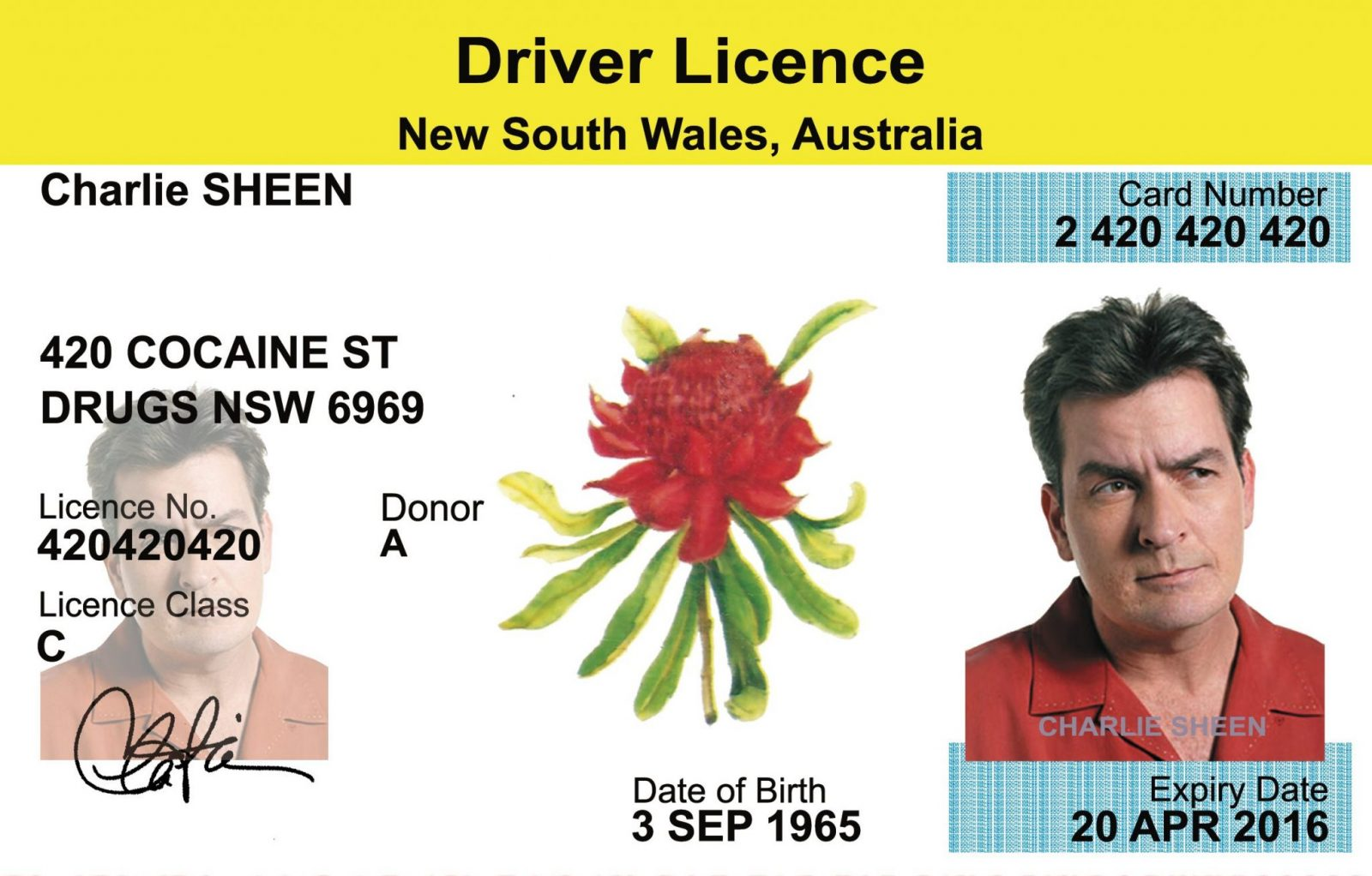 Drivers handbook nsw for full license